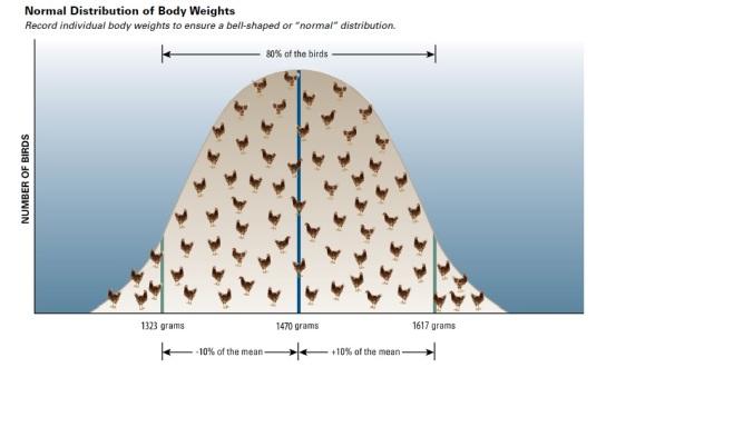 hyline-uniformity2